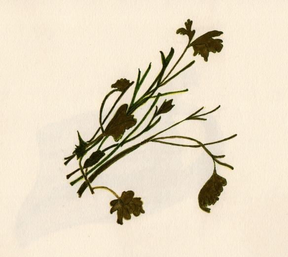 Parsley stems
